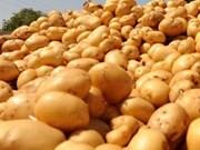 越南是新西兰土豆的潜力出口市场