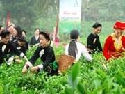 """塑造越南茶叶品牌 让越南茶叶品牌真正地""""走出去"""""""
