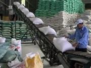 九龙江三角洲各省市力争大米产量达近2500万吨