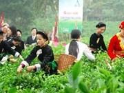 第二届越南太原茶叶节各项活动陆续举行
