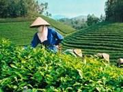 """精彩的""""越南茶香色""""赏茶晚会在太原省举行"""