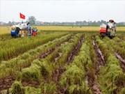 河内农业新貌