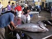 越南金枪鱼对欧盟的出口量大幅增加