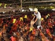 越南与荷兰加强食品安全合作