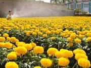 胡志明市迎春花卉节丰富多彩