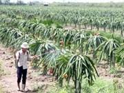 越南农业:唤醒潜力促进合作