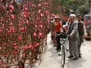 越南首都河内人春节的赏花爱好