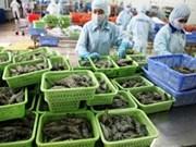 越南虾类出口额跃居世界第三