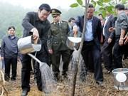 越南国家主席张晋创出席植树节启动仪式