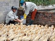 越南采取措施 预防H7N9禽流感入侵