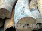 越南发现通过快递非法非贩运洲象象牙4.2公斤