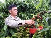 越南咖啡仁价格有所上涨