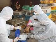 越南加强禽流感疫情预防工作