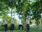 越南平顺省启动UN-REDD二期项目