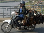 柬埔寨一人因感染H5N1型禽流感感染死亡
