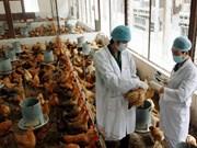 越南海阳和富寿两省宣布禽流感疫情已得到控制