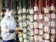 越南同塔省生产的草菇出口美国市场