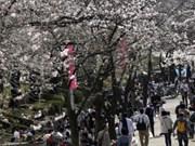 日本拟对印尼菲律宾和越南游客实行免签