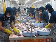 诸多日本企业即将赴九龙江三角洲地区寻找投资机遇