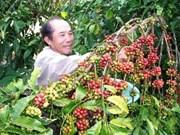 越南同奈省咖啡出口量猛增