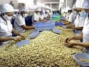 2014年越南腰果出口额有望达22亿美元