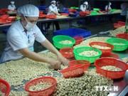 越南同奈省腰果出口总量与价格均增长