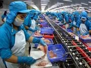 越南查鱼加工业进行结构重组