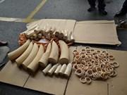 越南发现非法贩运象牙90公斤