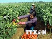 越南与日本加强农业领域合作
