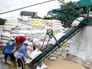 菲律宾决定增加从越南进口大米数量