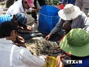 美国下调越南查鱼进口关税税率