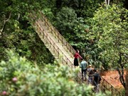 越南林同省懒猴旅游区