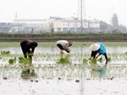 越南九龙江三角洲应对气候变化法律与政策实施情况