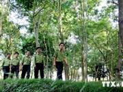 将林业经济发展和森林保护和可持续发展相结合