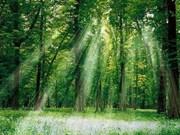 东盟与韩国加强林业领域合作