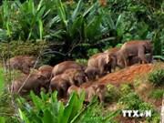 东盟面临生物多样性丧失威胁