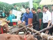 张晋创主席出席向边境地区贫困户赠送种牛发放仪式