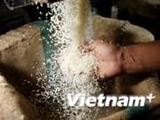 今年年初至今越南大米出口总额达17.28亿美元