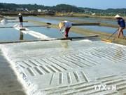 2014年前8个月越南盐产量达100多万吨