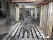 河内市保护与抢救野生动物323个体