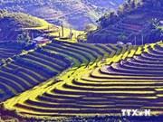 越南沙巴梯田被列入世界最美景点名录