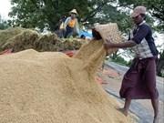 印度恢复进口缅甸大米