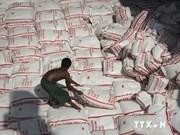 马来西亚从泰国购入20万吨大米