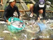 越南努力加大对外出口查鱼力度