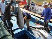 越南平定省推广金枪鱼捕捞新技术