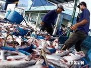 泰国成为越南在东盟国家中最大查鱼出口国
