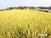 东盟与中日韩加强农业领域合作