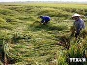 越南农业致力于应对气候变化