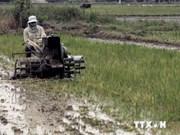 越南科研队荣获国际原子能机构植物突变育种奖