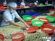 2015年越南腰果价格可高于2014年